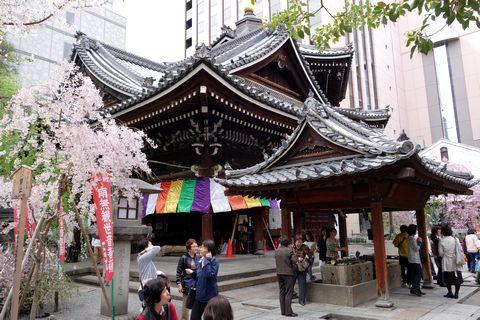 京都六角堂の桜 本堂