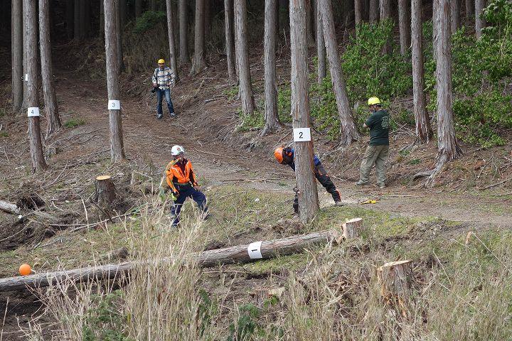 木こり技能大会 伐倒競技